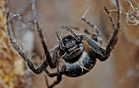 aladecouvertedesaraignees_spider-564635_640.jpg