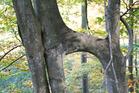 arbreetconscience3_crie-arbre-et-conscience3-2.jpg
