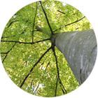 arbreetconsciencecyclede3journees_arbre-autour-de-nous-et-en-nous.jpg