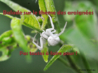 baladealadecouvertedesaraigneespastou_balade-sur-le-theme-des-araignees.png