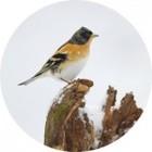 bf_imageles-oiseaux-dhiver-150x150.jpg