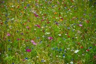 conferencedesjardinsmalrases_flower-meadow-2509889_960_720.jpg