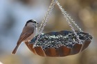 enviedobserverlesoiseauxdejardin_bird-1839844_640.jpg