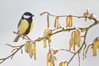 initiationalaphotonatureenhiver_crie-photo-nature-hiver-4.jpg