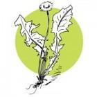 lesateliersdherboristerienettoyagedepri2_atelier-herbo-nettoyage-de-printemps-150x150.jpg