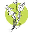 lesateliersdherboristerienettoyagedepri3_crie-atelier-herbo-nettoyage-de-printemps.jpg