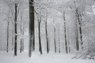 reconnaitrelesarbresenhiver2_crie-reconnaitre-les-arbres-en-hiver-3.jpg