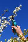tailledoucedesarbresfruitiers_taille-arbre-fruitier_fotolia_21815410_s.jpg