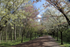 visiteduparcarbresetarbustesdecheznous2_visite-du-parc-arbres-et-arbustes-de-chez-nous.png
