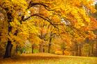 visiteduparccouleursdautomne_visite-du-parc-couleurs-d-automne.jpg