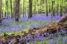 visiteduparcfloraisonsdeprintemps_visite-du-parc-floraisons-de-printemps.png