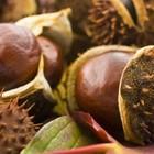 visiteduparcgrainesetfruits_visite-du-parc-graines-et-fruits.jpg