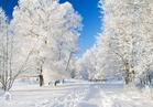 visiteduparclarbreenhiver2_visite-du-parc-l-arbre-en-hiver.jpg