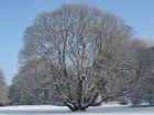 visiteduparclarbreenhiver_arbre-en-hiver.jpg