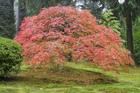 visiteduparclescouleursdelanaturesede2_visite-du-parc-les-couleurs-de-la-nature-se-devoil.jpg
